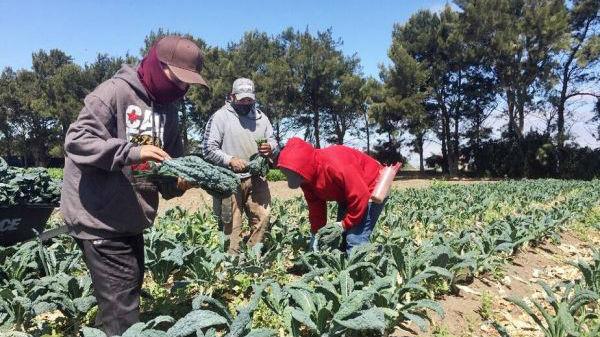 西媒:疫情阻断求学路 美学龄青少年变农田劳动力