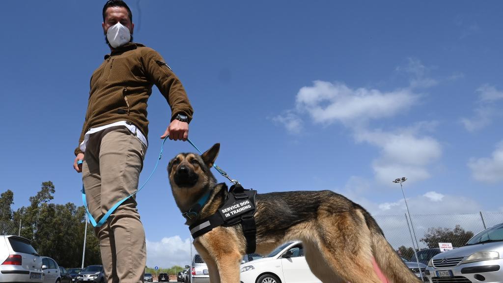意大利:训练嗅探犬探测新冠病毒