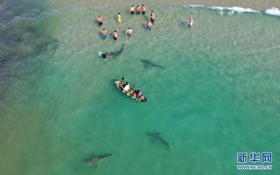 4月20日,在以色列北部城市哈代拉的海边,鲨鱼从人们身边游过(无人机照片)。新华社发(吉尔·科恩·马根摄)