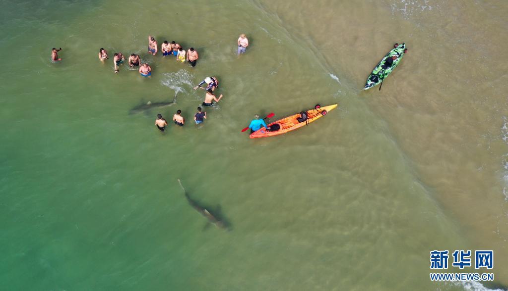 4月20日,在以色列北部城市哈代拉的海边,鲨鱼从人们身边游过(无人机照片)。新华社发(吉尔·科恩·马根摄)5