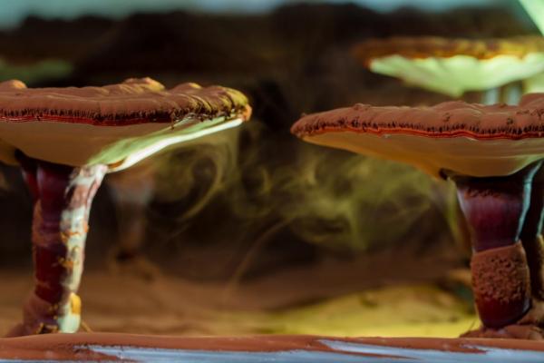 灵芝喷射灵芝孢子粉
