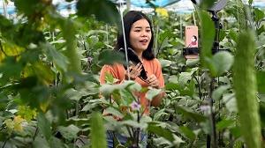 美媒:脸书模仿中国推直播购物