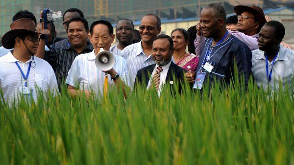 """新华社资料图片:""""杂交水稻之父""""袁隆平带领外国使节和友人在湖南水稻试验田参观(2009年9月摄)。"""