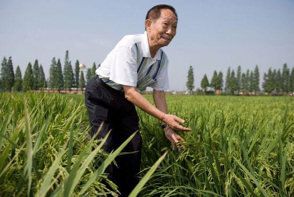 yuanlongping