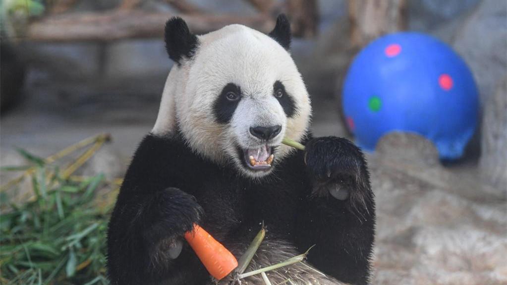 大熊貓端午享美食