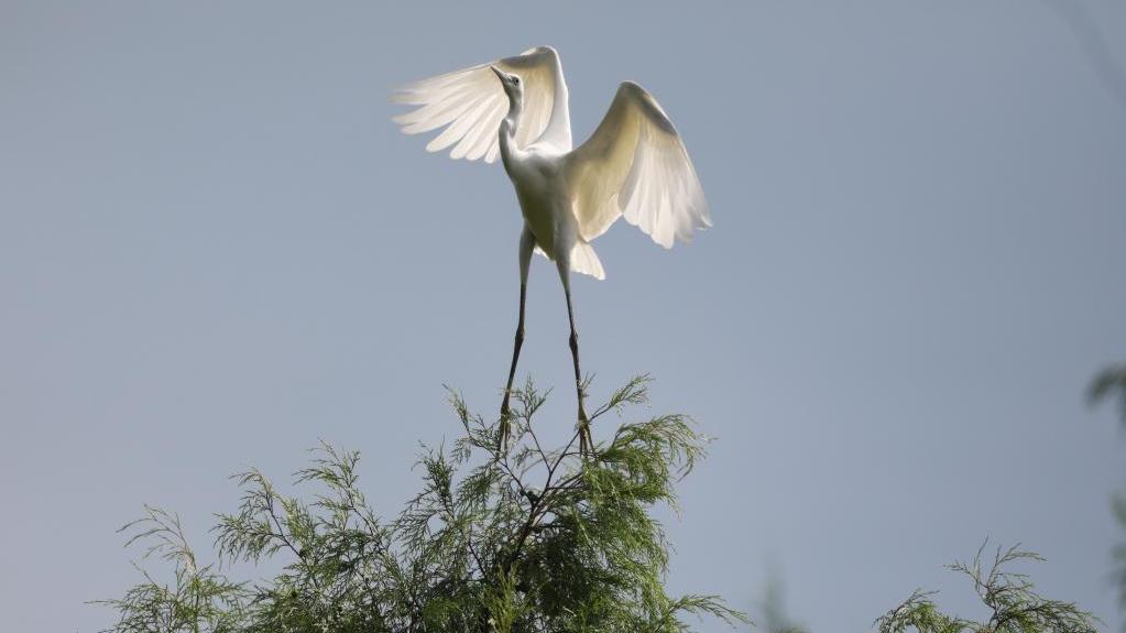 贵州岑巩渐成珍稀鸟类栖息地