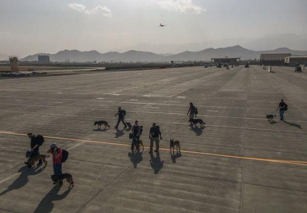 美军带着军犬撤离阿富汗。(今日俄罗斯电视台网站)