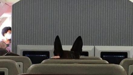 美国哥伦比亚广播公司发布的美国军犬乘飞机撤离喀布尔的图片。