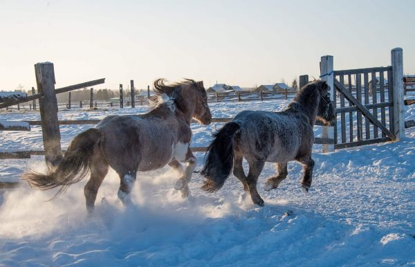 外媒:寒冷是难题!英国旅行者计划骑马环游世界