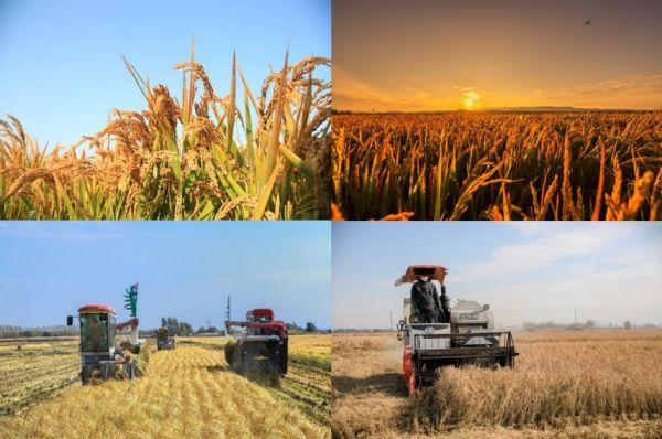 六大大米产区与京喜深度合作 千亩东北新米齐聚开拓新兴市场
