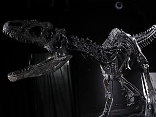 是谁花千万元买走恐龙骨架