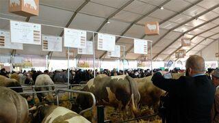 摩洛哥举办国际农业展